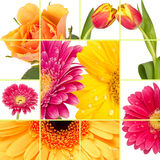 Spring Flower Stock Photos