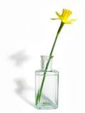 Spring flower. Yellow flower stock image