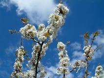 Free Spring Flower Royalty Free Stock Image - 610636