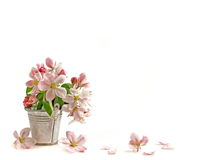 Spring flower Royalty Free Stock Photography