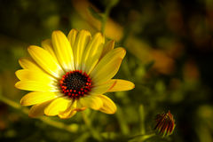 Spring Flower stock image
