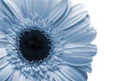 Free Spring Flower Royalty Free Stock Image - 913526