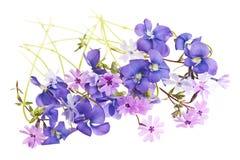 Spring flower arrangement Stock Photos