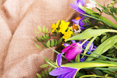 Spring flower arrangement against a rustic background Royalty Free Stock Images