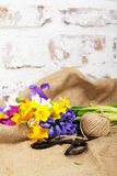 Spring flower arrangement against a rustic background Royalty Free Stock Photo