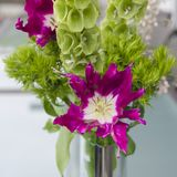 Violet tulip, green carnation, shellflower, broom in spring bouquet Stock Image