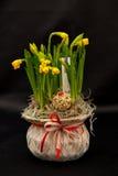 Spring flower arrangements Royalty Free Stock Photo