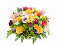 Spring flower assortment Royalty Free Stock Image