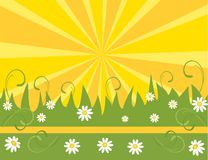 Spring flower background Royalty Free Stock Photos
