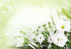 Spring flower background. Spring white flower in floral background royalty free stock photography