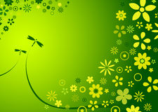 Spring flower background. Abstract background of spring / summer flowers Stock Images