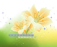 Spring Flower Background Royalty Free Stock Photo