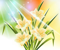 Spring Flower Background Stock Photography
