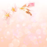 Spring flower background Royalty Free Stock Image