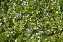 Spring flower background. Greeb green blue royalty free stock photo