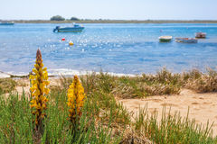 Spring flower on a background of a landscape with boats on the sea. Stock Images