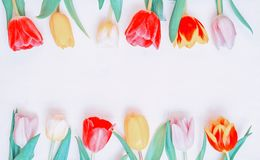 Spring flower background. Multicolored spring tulip flowers on the white wooden background, space for text stock photos