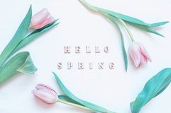 Spring flower background - pink tulip flowers and wooden inscription Hello Spring on the white background royalty free stock photo