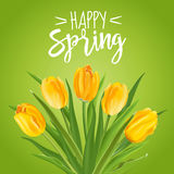Spring Flower Background Stock Photos