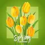 Spring Flower Background with Tulips Stock Photography