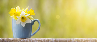 Spring flower banner Royalty Free Stock Image