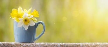 Spring flower banner Royalty Free Stock Image