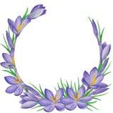 Spring flower  banner of crocuses. Watercolor Background Stock Image