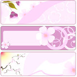 Spring flower banner with sakura Stock Photography