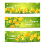 Spring Flower Banner Set Stock Photography