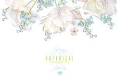 Spring flower banner. Vector spring horizontal flower banner with tulips on white background. Elegant tender design for natural cosmetics, perfume. With place royalty free illustration