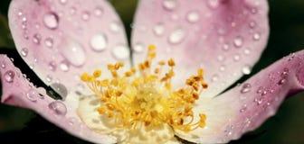 Spring flower banner Stock Image