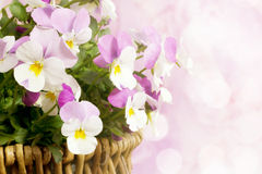 Spring flower basket Stock Photos