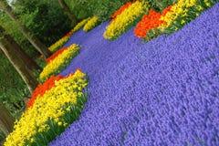 Spring flower bed. In Keukenhof, the Netherlands Stock Images