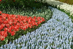 Spring flower bed Royalty Free Stock Photo