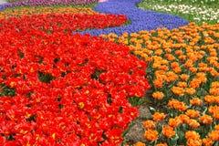 Spring flower bed. In Keukenhof gardens, the Netherlands Stock Photo