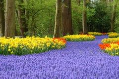 Spring flower bed. In Keukenhof, the Netherlands Royalty Free Stock Photos
