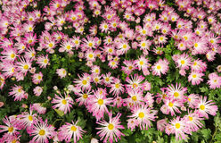 Spring flower bed Royalty Free Stock Image