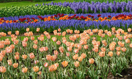 Spring flower bed Royalty Free Stock Photos