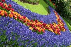 Spring flower bed. In Keukenhof gardens, the Netherlands Stock Image