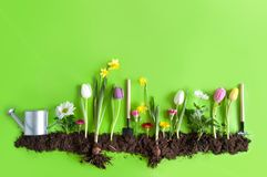 Spring Flower Bed Background Royalty Free Stock Images