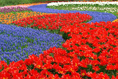 Spring Flower Bed In Keukenhof Gardens Stock Photo