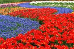 Spring flower bed in Keukenhof gardens stock photo