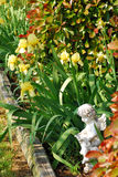 Spring Flower Bed. Yellow iris bloom in a spring flower bed royalty free stock image