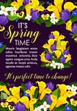 Spring flower and blooming plant greeting card. Spring Season Holiday floral banner, edged with crocus, calla lily, pansy and jasmine flower, green leaf branch Royalty Free Stock Photo