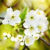 Spring Flower Blossom Stock Images