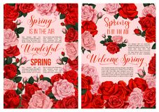 Spring rose flower blossom festive poster design. Spring flower blossom festive poster template. Blooming flower of red and pink rose plant, arranged into frame Royalty Free Stock Images