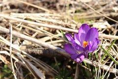Spring flower. Blossom near river Stock Photos