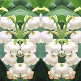 Spring flower blossom patterns royalty free stock photos