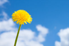 Spring flower on blue sky Royalty Free Stock Images