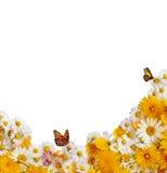 Spring flower border Royalty Free Stock Photo